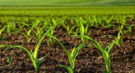پایان نامه کشاورزی
